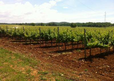 001-02_Unterwegs in den Weinanbaugebieten